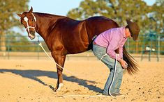 Training Tip of the Week: Teach your horse to be responsible for himself when you're handling his legs.