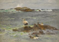 Eider Ducks on the Islet by Bruno Liljefors | Art Posters & Prints