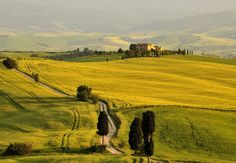 'Gladiator' fields South of Pienza by Peter Wilman, via Flickr