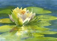 Watercolor of a water lily (No. 2), by Jake Marshall, © 2014.