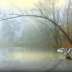 Conjuring Pond