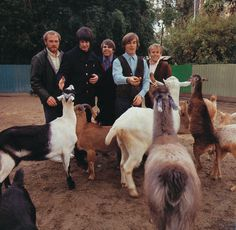 The Beach Boys #celebrities, #pinsland, https://itunes.apple.com/us/app/id508760385