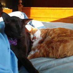 It's hard to get out of a warm bed when it's so cold outside.#InstaTags4Likes #cat #cats #kitten #kittens #catsagram #catstagram #instagood #pet #pets #love #animals #petstagram #petsagram #photooftheday #catsofinstagram #ilovemycat #instagramcats #catoftheday #caturday #lovecats #lovekittens #adorable #catlover #instacat #friends #oriental #tw #pin