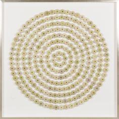 Sea Urchin Circles: Green | Natural Curiosities