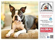 Charles 2013 Calendar, Fundraising, Boston Terrier, Dogs, Animals, Boston Terriers, Animales, Animaux, Pet Dogs