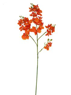 Phalaenopsis Orchid In Orange 40 Tall Only 10 29 Fall Wedding Flowers Bouquet Accent