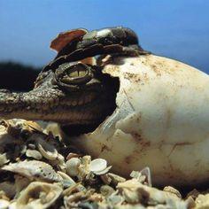 Baby Earth Critter bring born:-)
