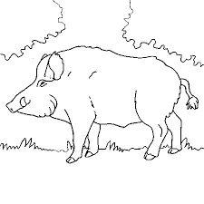 Resultat De Recherche D Images Pour Sanglier Illustration Coloriage Animaux Dessin Sanglier Coloriage Foret