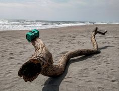 An awesome Virtual Reality pic! Tree on the beach. #VIOstreet #VIOverde #acapulco #mexico #travel #instatravel #traveling #realidadvirtual #vr #virtualrealitytour #virtual #virtualreality #realidadaumentada #3d #tech #technology #tecnologia #gadget #geek #geeks #tagsforlikes #tagsforlike #likesforlikes #likesforlike #like4like #likes4likes #likes4follow #followme #megusta #siguemeytesigo by viovisor check us out: http://bit.ly/1KyLetq