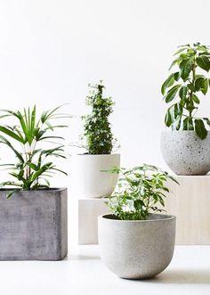 Ivy Muse · Calypso — The Design Files | Australia's most popular design blog.