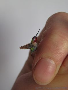 miniature hummingbird in scale - stunning work, absolutely gorgeous, too bad Etsy shop looks abandoned but check out her sold stuff to see of the most amazing miniature birds ever Miniature Crafts, Miniature Food, Miniature Dolls, Tiny World, Dollhouse Accessories, Tiny Treasures, Mini Things, Miniture Things, Dollhouse Miniatures