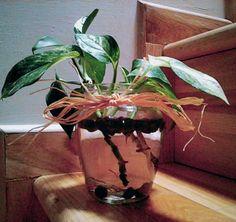 Photos-idroponica-interior decoration- Pensione in verde