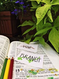 Thirty Days in John 15, Day 5: Vine and Branches   The Doorposts Blog
