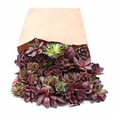 Sempervivum (Hens and Chicks) Assorted Unrooted Rosettes - LB Bag can be grown outside in our zone Succulent Cuttings, Plant Cuttings, Planting Succulents, Buy Succulents, Succulent Gardening, Succulent Arrangements, Succulent Plants, Succulent Potting Mix, Wholesale Succulents
