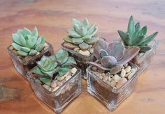 Top 30 Lembrancinhas de Casamento - San Pedro Cactus