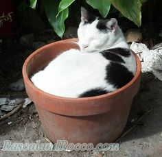Rascal and Rocco: How to Create a Cat's Garden, Patio, or Outdoor Space