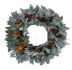 Seeded Safari Peppers Wreath is popular Wreath also for boutonnieres, corsages, wedding cakes, and hair combs where a smaller sized head is perfect. Flowers Online, All Flowers, Silver Flowers, Wreaths For Sale, Holiday Wreaths, Greenery Garland, Garlands, Magnolia Green, Manzanita Branches