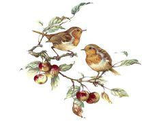 CHAFFINCH Sizes available 195, 150, 130, 100, 75, 65 and 40mm. See also 6775 A, B, D, E and F