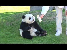 桜浜 桃浜 panda baby run パンダ - YouTube