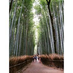 Kitasaga Bamboo Grove