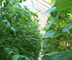 Todmorden, UK Expands Edible Garden Initiative With Flourishing Aqua Farm | Inhabitat - Sustainable Design Innovation, Eco Architecture, Green Building