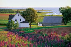 15 Great Reasons You Should Want to Visit Prince Edward Island, Canada