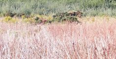 Walk with kids in a nature reserve in Autumn / Fall in the Hamptons at Soho