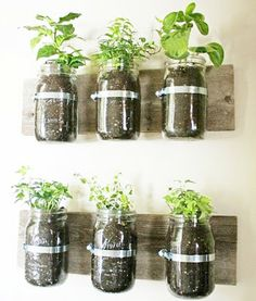 Herb garden wall art!