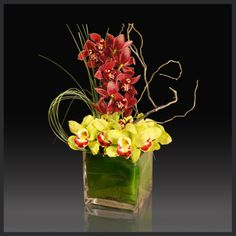EXOTIC COLLECTION ORCHID ESSENCE - Let the essence of orchids fill your life! The finest red and green cymbidium orchids are displayed for your pleasure in this ti-leaf wrapped clear cube vase. Bear grass and curly willow adorn the arrangement.