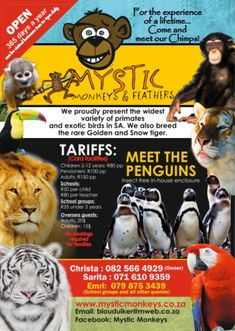 Mystic Monkey & Feathers For the experience of a lifetime Come meet our Chimps! Contact Christa: 082 566 4929 Sarita: 071 610 9359 Emri: 079 857 3439 Email: blouduiker@mweb.co.za www.mysticmonkeys.co.za Snow Tiger, Exotic Birds, Primates, Mystic, Feathers, Monkey, Meet, Jumpsuit, Primate