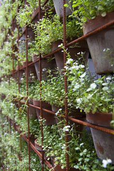 Potted green wall. Industrial.