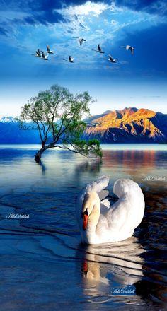 Cute Pastel Wallpaper, Mute Swan, Whatsapp Dp Images, Swan Lake, Beautiful Birds, Fractals, Creative Art, Nature, Photography