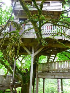treehouse for you Carmy!