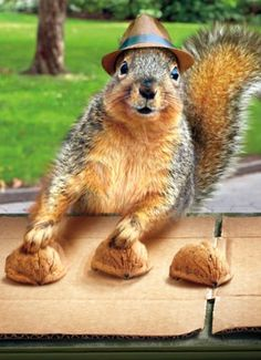 Pick a nut. Any nut . . .Hi Sugar Bush! It's me Annabelle! Hope you had a great Thanksgiving. I'm getting ready for Christmas now. My mom has a santa hat and collar she makes me wear...