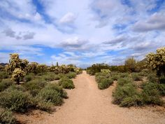 On the trails at Usery Mountain Regional Park