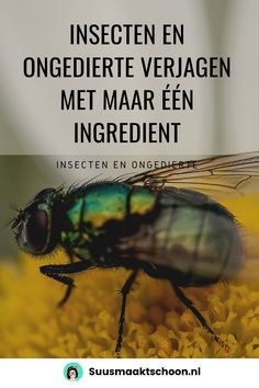 Old Wives Tale, Home Scents, Weed Control, Garden Pests, Healthy Tips, Housekeeping, Good To Know, Cleaning Hacks, Life Hacks