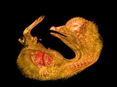 The Nikon Small World photomicrography competition was expanded to include video three years ago, and the result has been an incredible look into living things on the microscopic scale. This year's winning video, above, is a three-dimensional look through a 10-day-old quail embryo growing inside its egg.