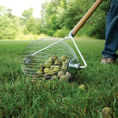 Pickup Wizard For Large Fruits and Nuts (1.25-inch diameter minimum)