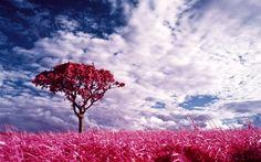 pink color - Pesquisa Google
