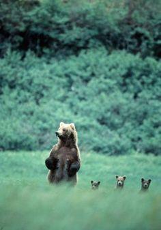 baby bears!
