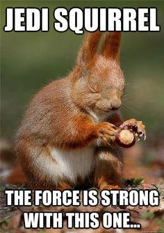 jedi squirrel