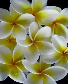 I cant wait for my Plumeria trees to blossom :)
