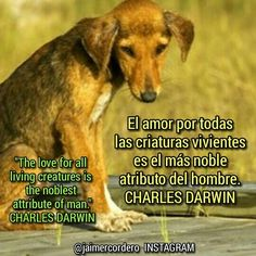 * * THE LOVE OF ALL LIVING CREATURES IS THE NOBLEST ATTRIBUTE OF HUMANS. ~ Charles Darwin