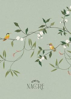Nacre Botanicals | Tropical illustration and brand development by Cocorrina