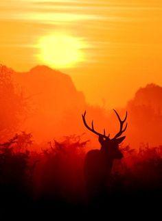 Resultado de imagem para deer sunrise