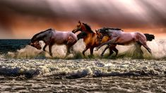 Sharing the passion of one of my favorite heroines, Sarah Kerry!Blog   Author Alicia Dean   ©AliciaDean Tier Wallpaper, Animal Wallpaper, Beautiful Horses, Animals Beautiful, Pet Shop Online, Image Nature, Nature Nature, Ocean Day, Running Horses