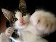 Karate kitten!