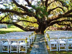 Private Estate Wedding Ceremony under a beautiful old tree.  Crystals hung from the branches and Aisle decor by Elegant Design Floral Studio and Photograph and Coordination by Sarasota Catering Company.