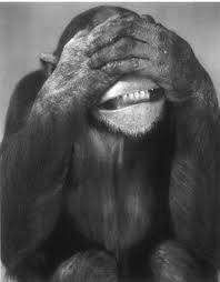 Resultado de imagen para monos chistosos