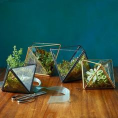 terrarium selber bauen kunstvoll interessant füllen mit sukkulenten
